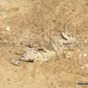 """Уничтожение противопехотной мины """"ОЗМ-72"""". Обезвреживание мин"""